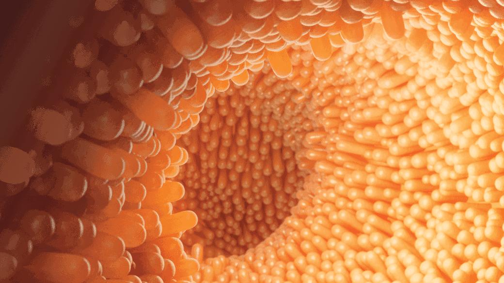 Darmflora Aufbau